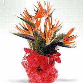 Birds Of Paradise With Anthuriums