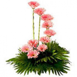 10 Pink Gerberas Arranged Beautifully