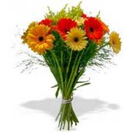 12 Assorted Gerberas Bunch